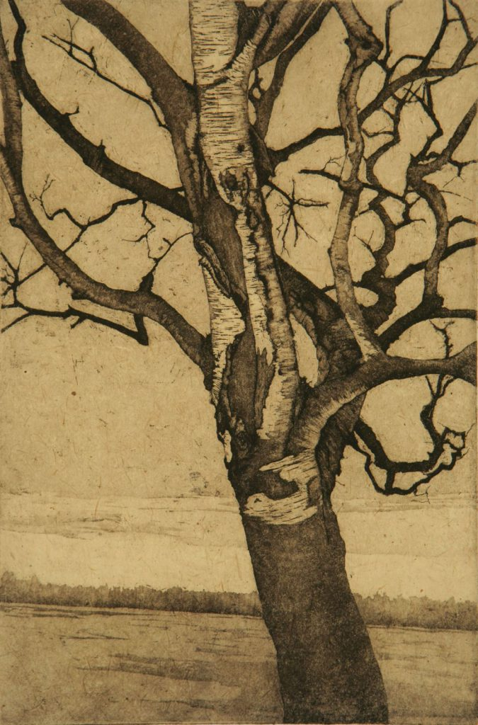 "Birch at Lake; etching w/ chine colle; 12"" x 8""; 2008"