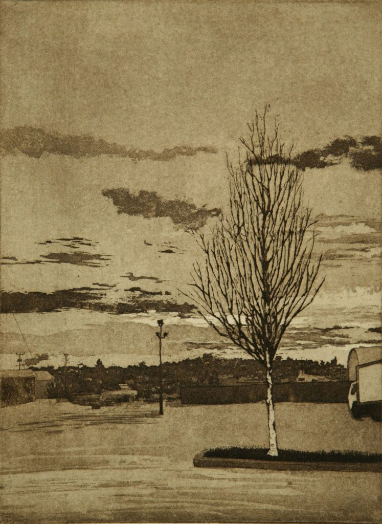 Birch in Parking lot