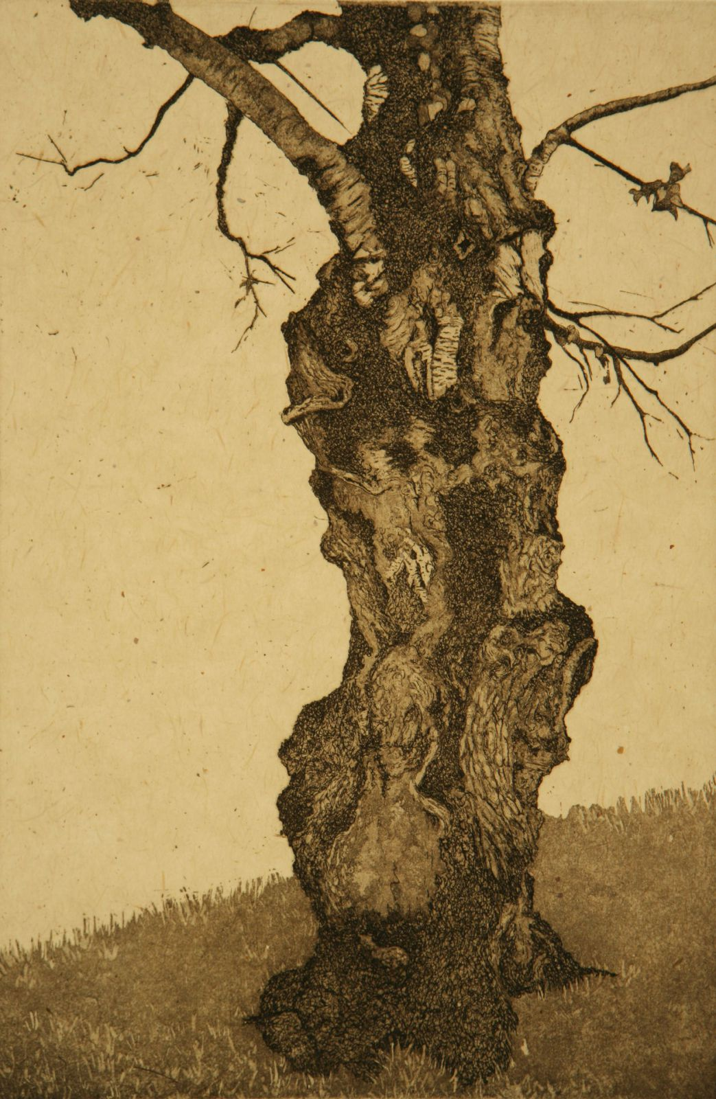 "Portland Birch; etching, chine colle; 12"" x 8"", 2008"