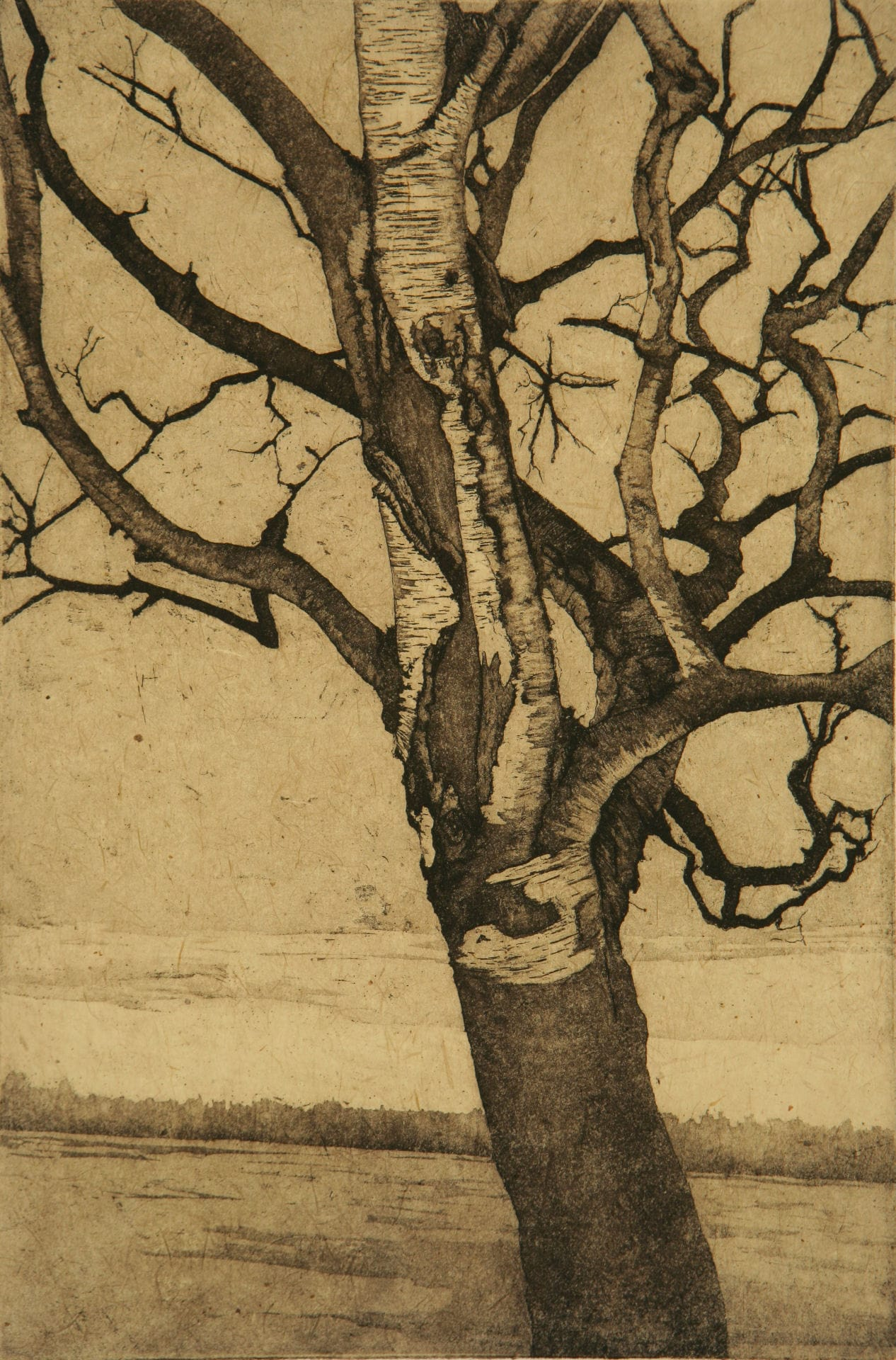 "Birch at Lake; etching, chine colle; 12"" x 8"", 2008"